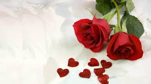 red roses most por rose rose wallpapers beautiful rose red rose pictures