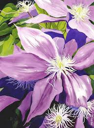purple clematis in sunlight painting by janis grau purple clematis in sunlight fine art prints