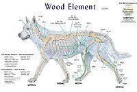 Canine 5 Element Meridian Chart Set Of 4 Dog Lake Forest Anatomicals Vet Models Lake Forest Anatomicals Vet Models