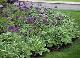 front yard vegetable garden layout. flower bed design plans front yard vegetable garden layout