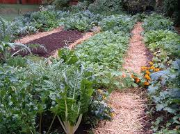 21 Vegetables For The Fall GardenFall Garden Crops