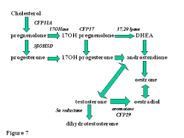 The Mechanism Of Ovulation Glowm