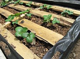 how to make raised wood pallet garden bed