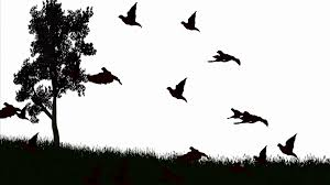 bird flying silhouette. Exellent Silhouette Silhouette Of Birds Flying Over Lanndscape Black And White Motion  Background  Videoblocks Inside Bird Flying