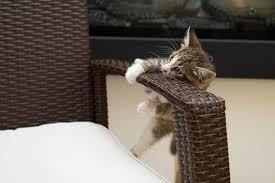 funny cat kittens beautiful cats
