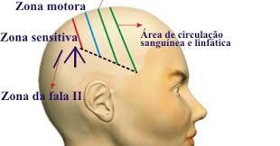 Resultado de imagem para foto cranioacupuntura