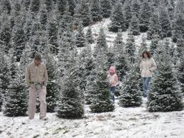 Pick Your Own Christmas Tree Nj  Home Decorating Interior Design Valley Christmas Tree Farm