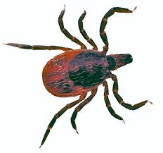Image result for cartoon tick