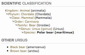 Bear Classification Chart Polar Bear Taxonomy Classification Chart Google Search