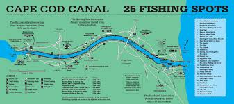 Cheat Sheet For The Unique Cape Cod Canal Fin And Field Blog