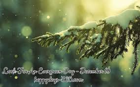 Look For An Evergreen Day - December 19, 2018 | Happy Days 365