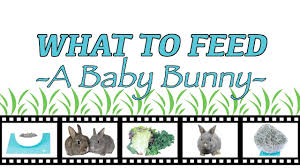 What To Feed A Baby Bunny