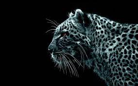 All pictures are free of charge and licensed under the free pexels license. Black Cheetah Wallpapers Wallpaper Cave