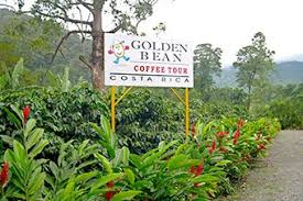Costa rican coffee has grown to be much more than an economic boost to local culture. Princess Cruises Excursion Golden Bean Coffee Tour Scenic Drive Lunch