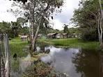 imagem de Acará Pará n-12