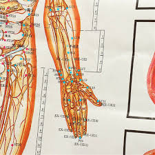 Chinese Medicine Body Acupuncture Points Meridians And