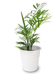 11 indoor plants safe for cats and dogs