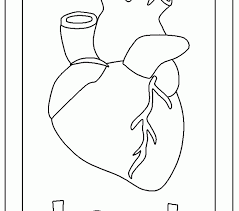 Small Picture Color Human Heart Coloring Page At Decor Desktop fantastic Kids