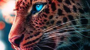 Cheetah Eyes Wallpapers - Top Free ...
