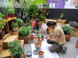 Small Picture Rooftop Garden Design And Build GrowingSmartHK