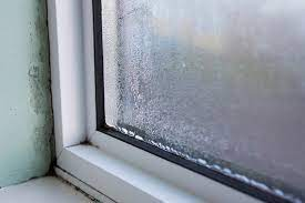 how to remove and prevent mold on your