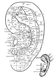 Ear Acupuncture Chart Free 42 Logical Acupressure Points Chart Free Download