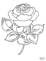 Small Picture Blooming Rose coloring page Free Printable Coloring Pages