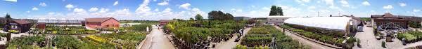 Garden Centre Kitchener Grobes Nursery And Garden Centre Home