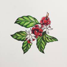 coffee bean plant illustration. Plain Coffee Coffee Beans Plant Illustration  Google Search Throughout Coffee Bean Plant Illustration Pinterest
