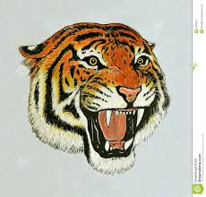 tiger face growling drawing. Perfect Drawing How To Draw A Tiger Face Roaring  Photo28 Throughout Tiger Face Growling Drawing