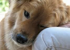 Картинки по запросу умирает собака