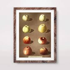 Amazon Com Vintage Fruit Chart Apples Art Print Poster