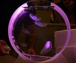 mini jelly fish tank