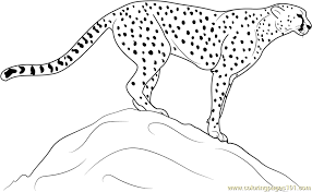 Small Picture Cheetah Standing on Rock Coloring Page Free Cheetah Coloring