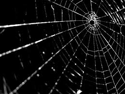 Image result for spiders web