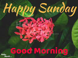 Happy Sunday Good Morning Wishes Quotes Images Pics Hd Wallpaper