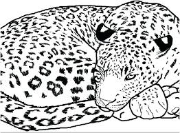 Leopard Coloring Pages 617 Leopard Coloring Pages 4 Marvelous