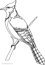 Small Picture Coloring Pages Birds Miakenasnet