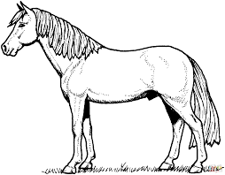 Small Picture Stallion Horse coloring page Free Printable Coloring Pages