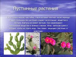 Реферат на тему растения полупустынь и пустынь Интересное в мире  реферат на тему растения полупустынь и пустынь чем носить меховую