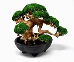 paper bonsai father s day gift gifts for him bonsai gift bonsai tree birthday gift unique gif