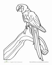 p22isp9 parrot coloring pages getcoloringpages com on parrot outline template