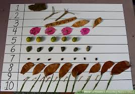How To Create A Counting Nature Chart 6 Steps With Pictures