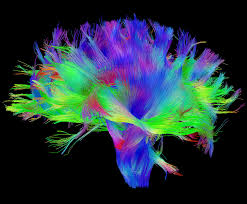 can we figure out the brain s wiring diagram neurobanter diffusion mri of the human brain source human connectome project