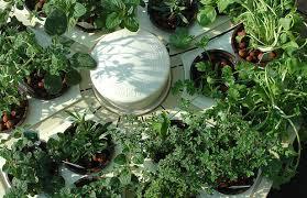 outdoor hydroponic garden