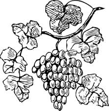 grapes clipart black and white. vector drawing of grapes clipart black and white