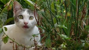 how to keep cats out of the garden. How Can You Keep Cats Out Of A Garden? To The Garden E