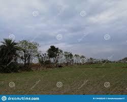 Mooi Wolken En Bomen Als Achtergrond Behang Stock Afbeelding