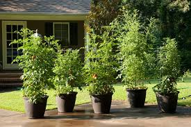 container gardening choose the right