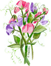 i guess it is the dreary foggy days we ve been having but it makes me want to paint garden watercolors sweet peas are one of my favorite flowers